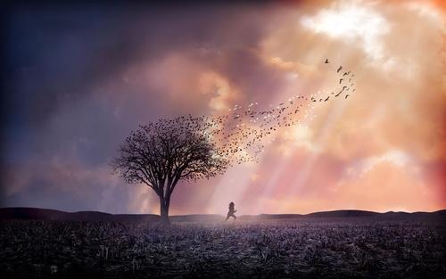 Обои Девушка убегает от дерева в солнечных лучах, с кроны которого улетают белые и черные птицы, обои для рабочего стола Девушка