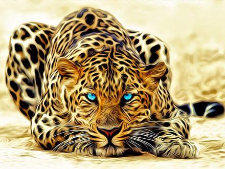 Обои Леопард с голубыми глазами лежит на земле