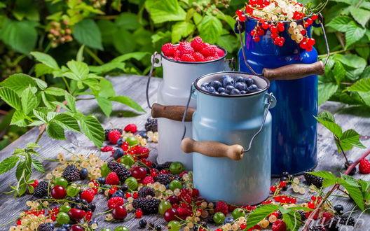 Обои На деревянном столе стоят три эмалированных бидона с ягодами малины, голубики, красной и белой смородины, россыпью на столе лежат ягоды малины, вишни, крыжовника, ежевики, голубики и смородины, а также веточки с зелеными листьями