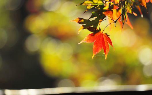Обои Осенние листья на фоне солнечных бликов