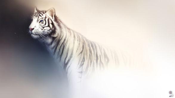 Обои Белый тигр с голубыми глазами смотрит в сторону на серо-белом фоне