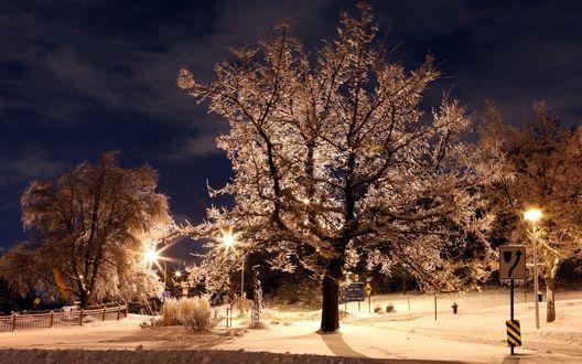 Обои Деревья, покрытые густым слоем инея, стоящие на заснеженных аллеях ночного парка с ярко горящими светильниками уличного освещения, указательными знаками на фоне ночного пасмурного неба