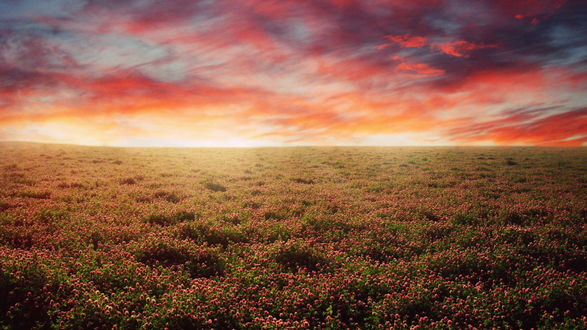 Обои Поле цветущего розового клевера на фоне закатного неба
