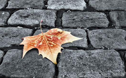 Обои Осенний лист, лежащий на дороге