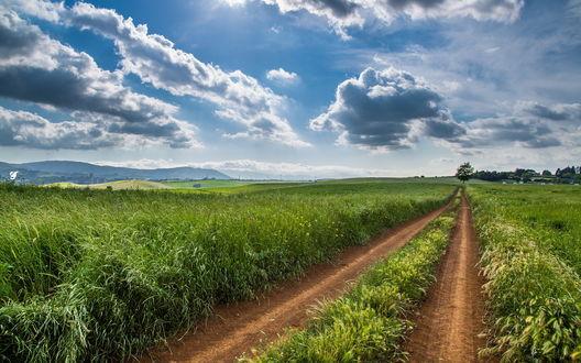 Обои Дорого в зеленом поле на фоне деревьев, неба и гор