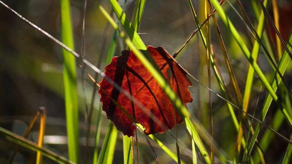 Обои Сухой листок в зеленой траве