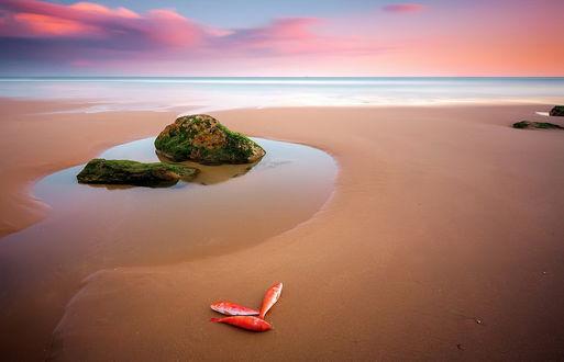 Обои На песчаном морском побережье лежат три красные рыбки, рядом стоят в воде два каменных валуна, покрытых зеленым мхом, фотография FLOP