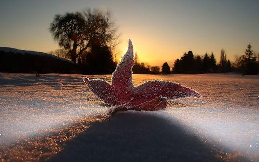 Обои Осенний кленовый лист на первом выпавшем снегу на закате солнца