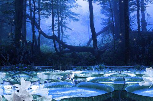Обои Лесное озеро заросшее кувшинками, над которым летают светлячки
