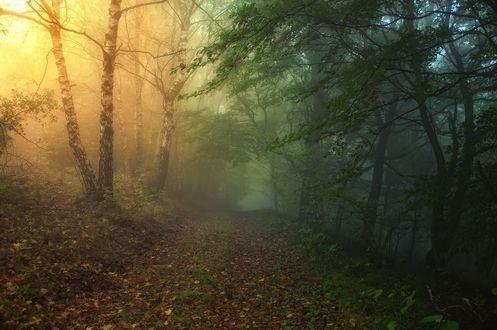 Обои Грунтовая дорога, усыпанная опавшей листвой, в туманном осеннем лесу, фотограф Janek Sedlar / Янек Седлар