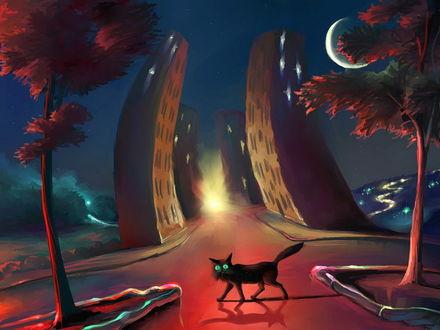 Обои Черный кот с большими зелеными глазами переходит мостовую, освещенную розовым светом от фар автомобилей на фоне звездного ночного неба с луной в форме полумесяца, небоскребов, стоящих вдоль дороги