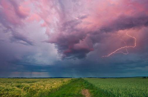 Обои Грунтовая дорога, заросшая зеленой травой, проходящая по полю со зреющими зелеными колосьями на фоне грозового неба со сверкающими молниями, фотография Arkhipow Dmitriy