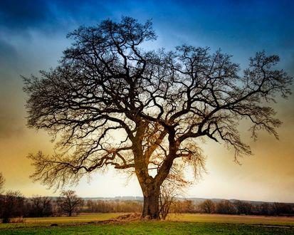 Обои Одинокое дерево на фоне голубого неба