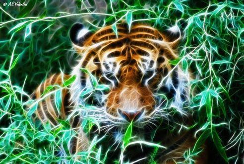 Обои Лесной тигр, автор Lady-Valentine-Art