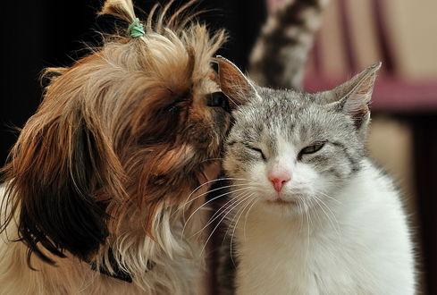 первое знакомство котенка и щенка