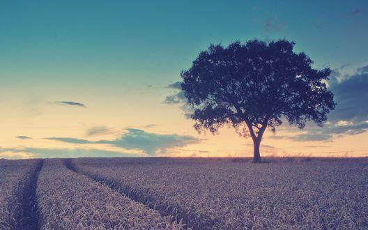 Обои Дорога в высокой траве в поле на котором одиноко стоит дерево на фоне заката