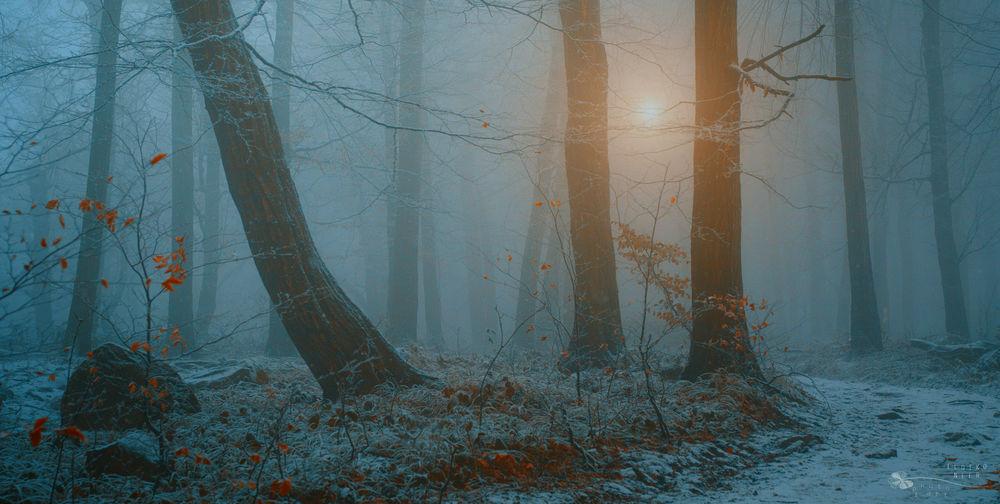 Обои Поздняя осень в осеннем лесу, выпал первый снег ...
