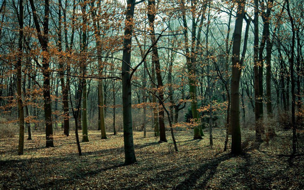 Картинки деревья поздней осенью