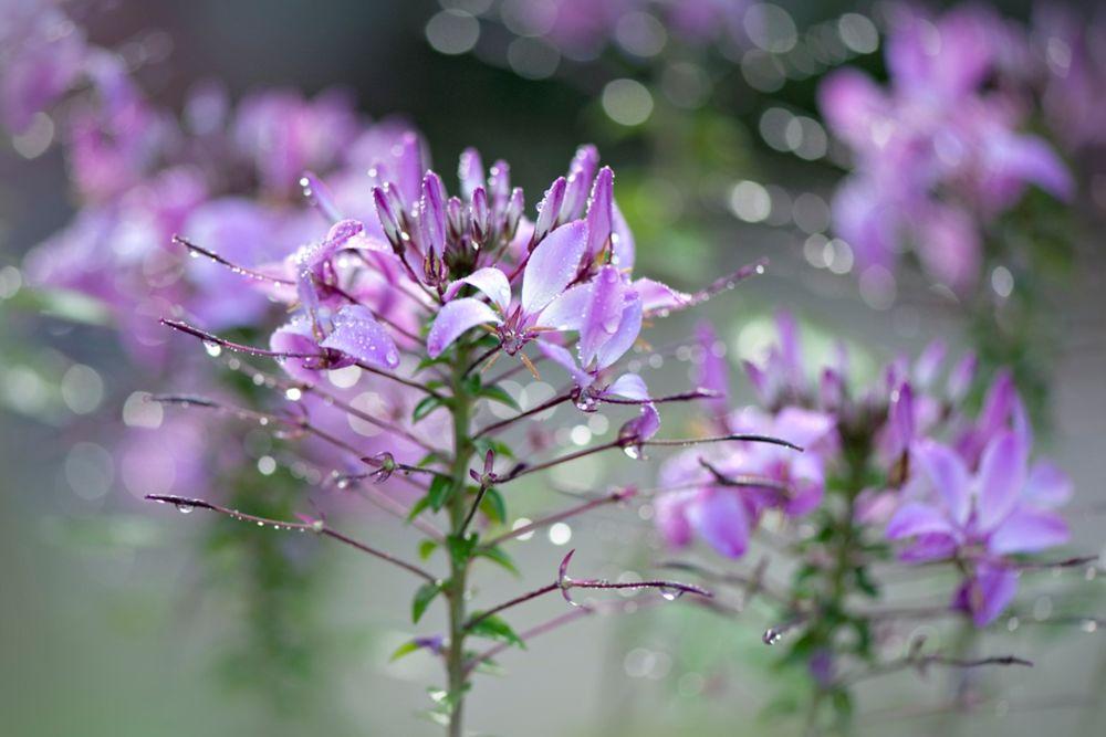 Сон-полевые цветы
