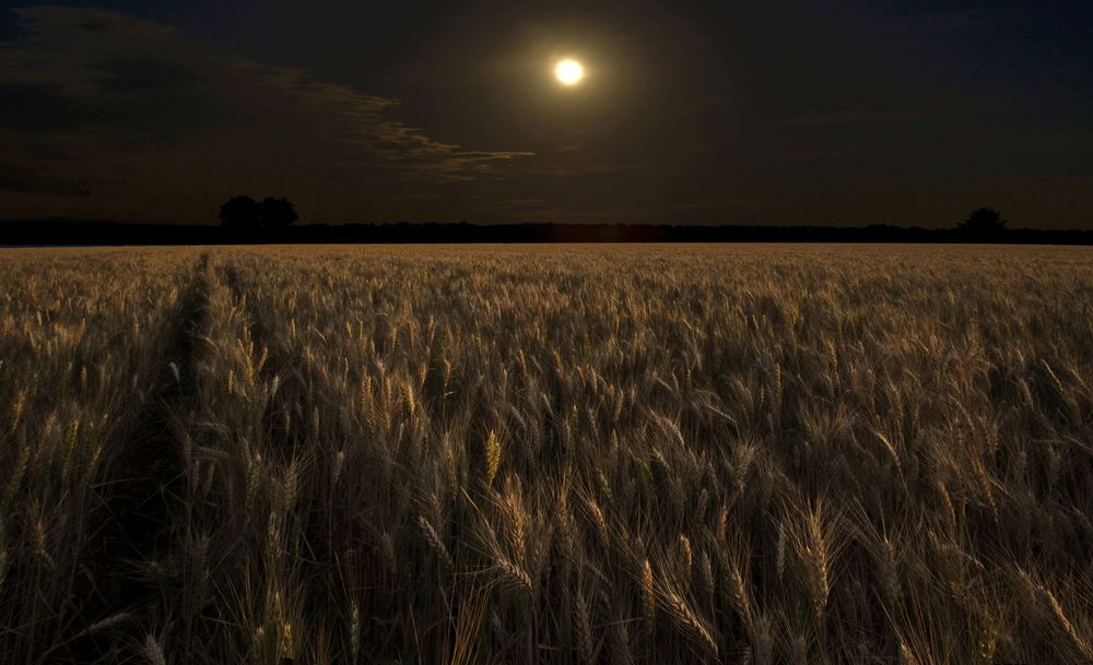 ночная луна в поле фотографии это наименование