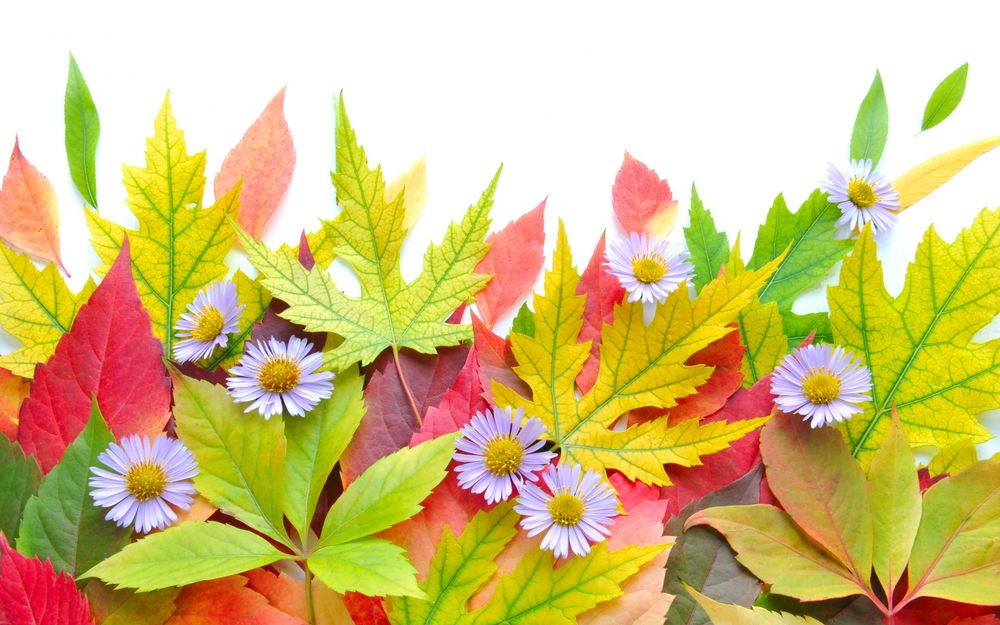 Фото осенних цветов на рабочий стол компьютера