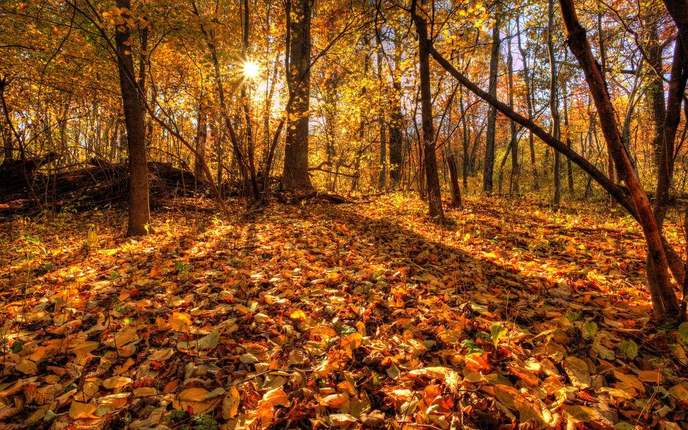 Обои Яркий осенний лес в лучах солнца на рабочий стол