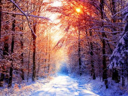 Обои Слепящее яркое зимнее солнце в лесу, фотограф SvenMueller