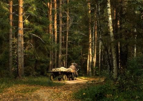 Обои Пожилой мужчина, сидящий на деревянной телеге с автомобильными колесами, управляет лошадью, направляя ее по грунтовой лесной дороге, осыпанной опавшими листьями, фотография Дмитрия Алксеева