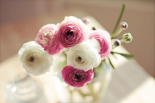 Обои Букет из белых и розовых ранункулюсов в стеклянной вазе на размытом фоне
