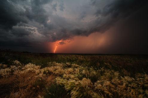 Обои Огромная степь, покрытая ковылем на фоне грозового неба с темными свинцовыми тучами, сверкающей молнии. фотография marateaman