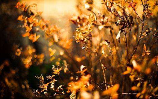 Обои Куст в желтой осенней листве