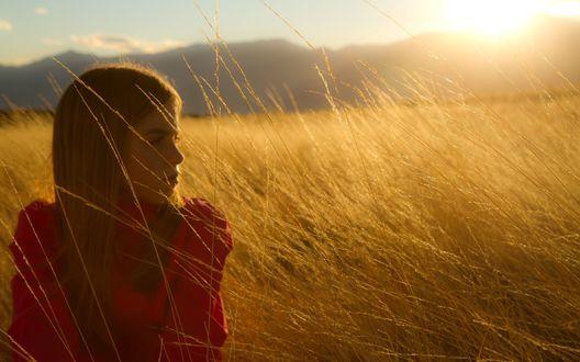 Обои Девушка сидит в высокой тонкой траве в солнечном свете