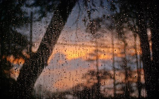 Обои Окно в каплях от дождя, за которым видны деревья