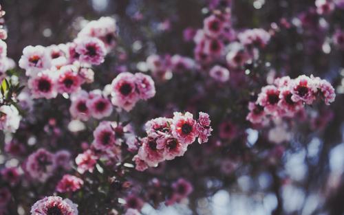 маленькие фото цветов: