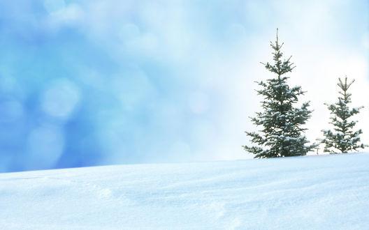 Обои Две елочки, стоящие на снегу
