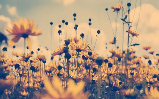 Обои Маленькие желтые цветы на фоне неба