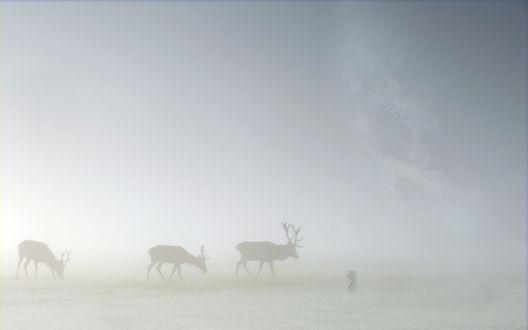 Обои Силуэты оленей в густом тумане и герой мультфильма Ежик в тумане