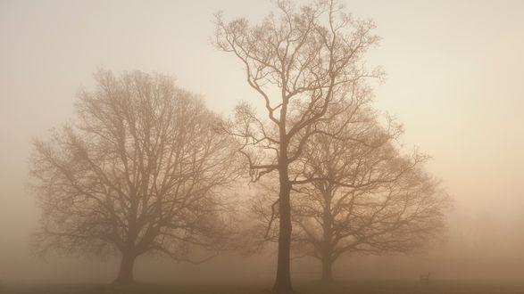 Обои Деревья с голыми густыми ветвями окутанные туманом