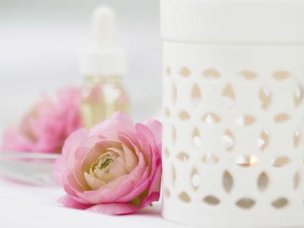 Обои Розовый лютик лежит возле белой керамической аромалампы