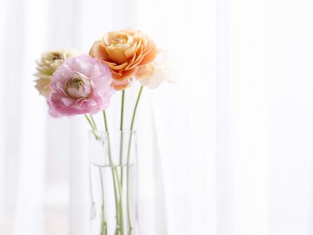 Обои Четыре пышных лютика в высокой стеклянной вазе