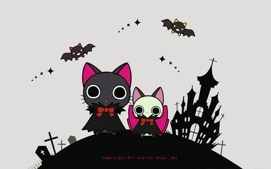 Обои Nyanpire / Нянпир, Chachamaru / Тятямару, Mori-kun / Мори-кун и Komori-kun / Комори-кун из аниме Nyanpire / Нянпир (Vampire Cats Will Suck Your Blood. Nya)