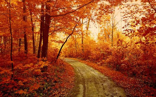 Обои Проселочная дорога в осеннем лесу