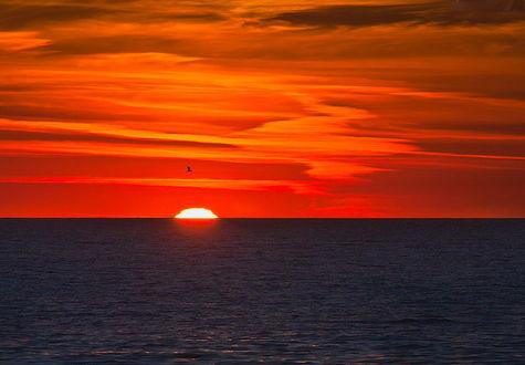 Обои Заходящее за линию горизонта солнце с багряным закатом на небе, с парящей одинокой птицей над морскими просторами, фотография Ольги М