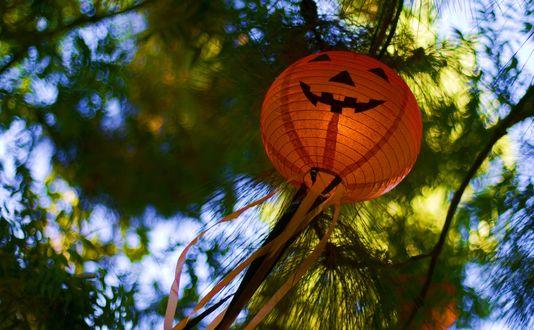 Обои Китайский фонарик в виде светильника Джека / Jack Light среди деревьев летит вверх