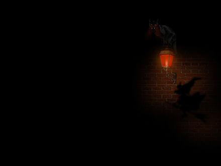 Обои Черная кошка сидит на фонаре во тьме