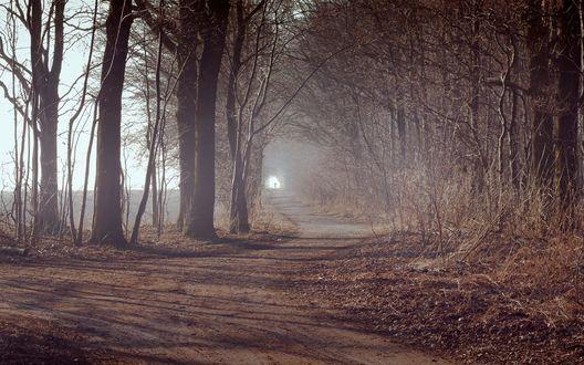 Обои Поздняя осень, грунтовая дорога проходит мимо голых деревьев