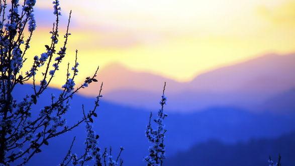 Обои Цветущие ветви дерева на фоне гор на рассвете