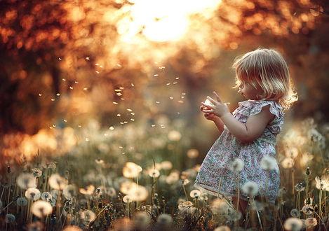 Обои Милая белокурая девочка, находящаяся на поляне среди одуванчиков, сосредоточенно дует на одуванчик, находящийся у нее в руках на фоне ослепительных, полуденных солнечных лучей, фотография Елены Корнеевой