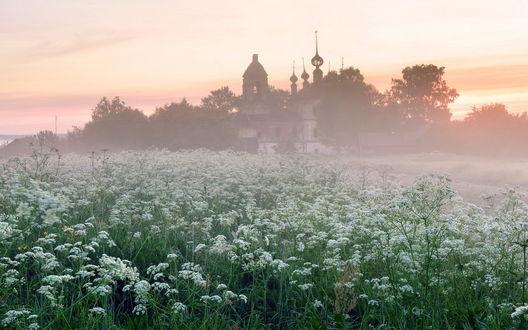 Обои Огромная поляна сорной травы сныть, расположенной перед разрушенной, заброшенной каменной церковью, окруженной деревьями на фоне восходящего солнца и легкой туманной дымки, фотография Максима Евдокимова