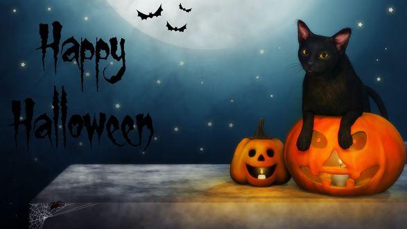 Обои Happy Halloween. Черная кошка сидит в тыкве на фоне полной луны